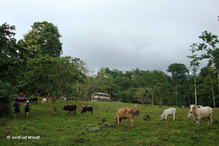 Soposo farm